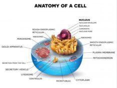 Die Zelle ist unsterblich