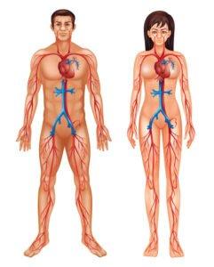 Gefäßerkrankungen
